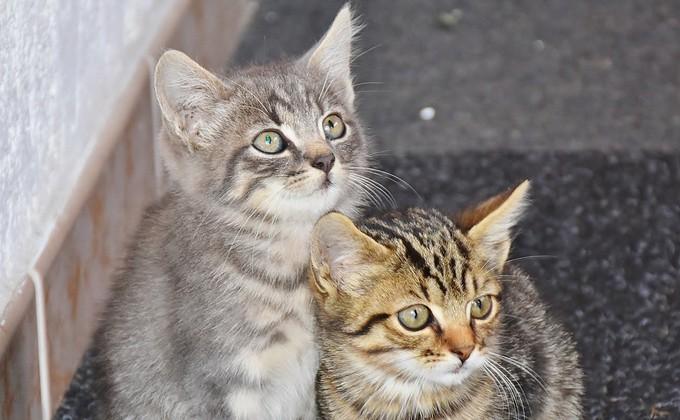 Do female cats spray to mark territory