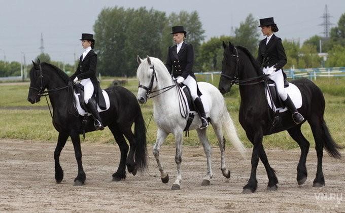 Конкурсы для детей про лошадь
