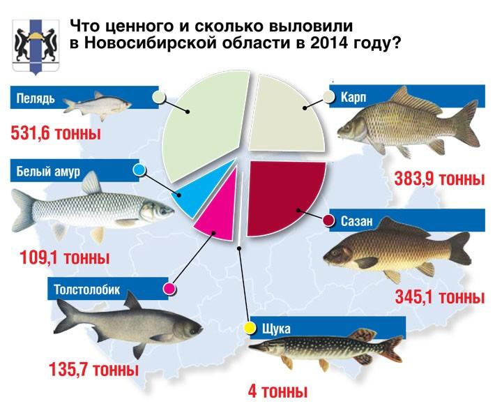 ловля рыбу в новосибирске